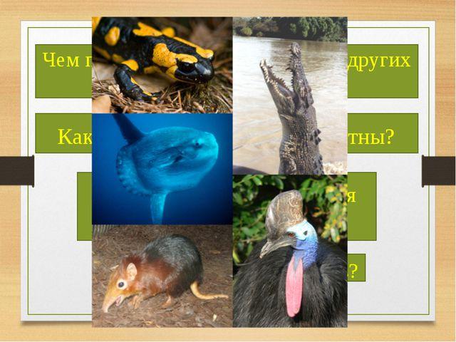 Чем позвоночные отличаются от других животных? Какие позвоночные вам известн...