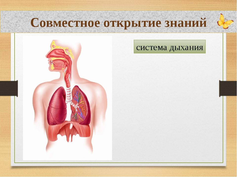 Совместное открытие знаний система дыхания