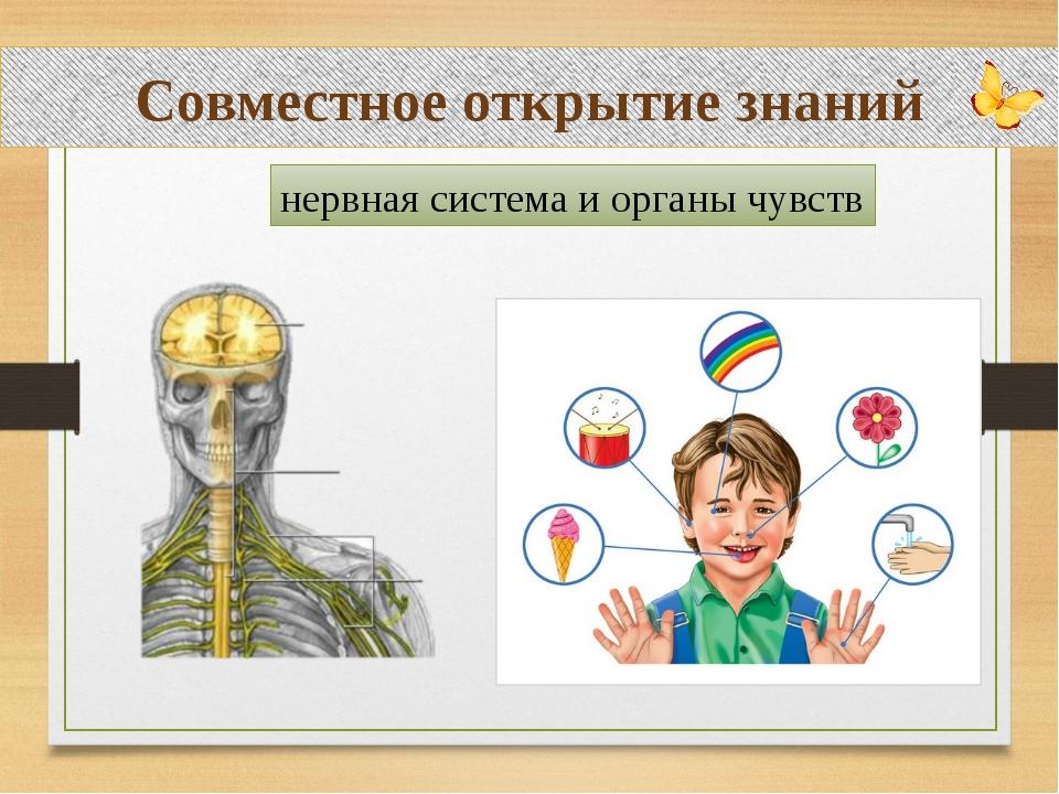 Совместное открытие знаний нервная система и органы чувств