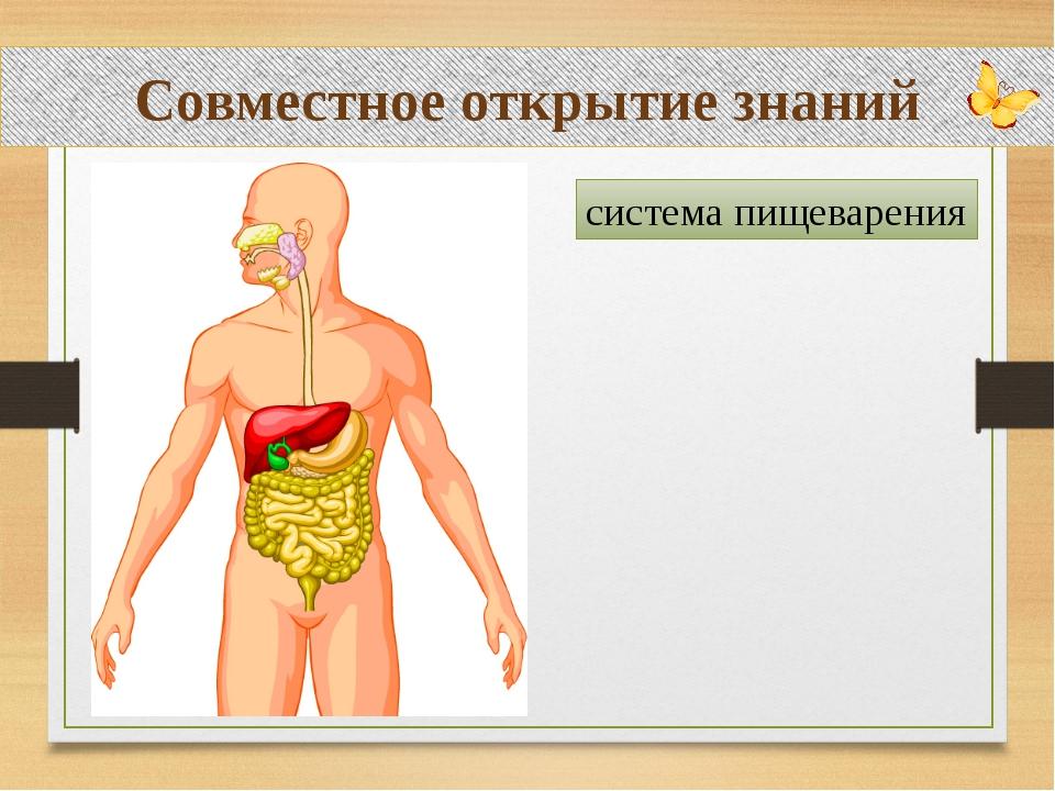 Совместное открытие знаний система пищеварения