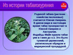 Родиной табака (растение семейства пасленовых) считается Южная Америка. В дик