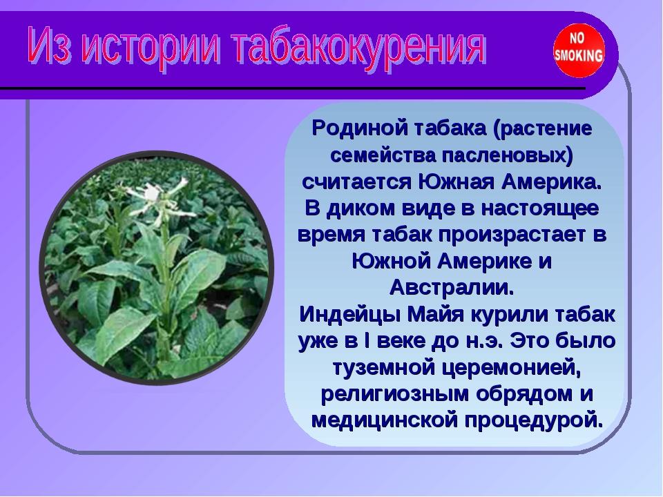 Родиной табака (растение семейства пасленовых) считается Южная Америка. В дик...