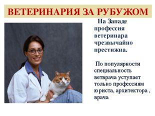 ВЕТЕРИНАРИЯ ЗА РУБУЖОМ На Западе профессия ветеринара чрезвычайно престижна.