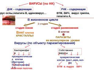 ДНК – содержащие РНК – содержащие вирус оспы,гепатита В, аденовирус… ВТМ, ВИЧ