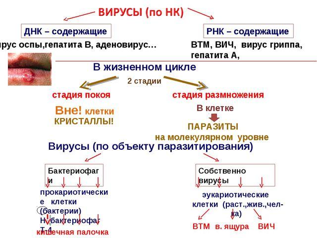 ДНК – содержащие РНК – содержащие вирус оспы,гепатита В, аденовирус… ВТМ, ВИЧ...
