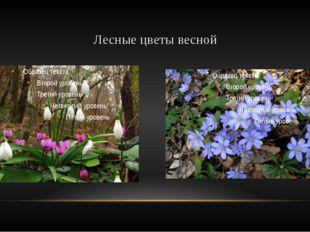 Лесные цветы весной