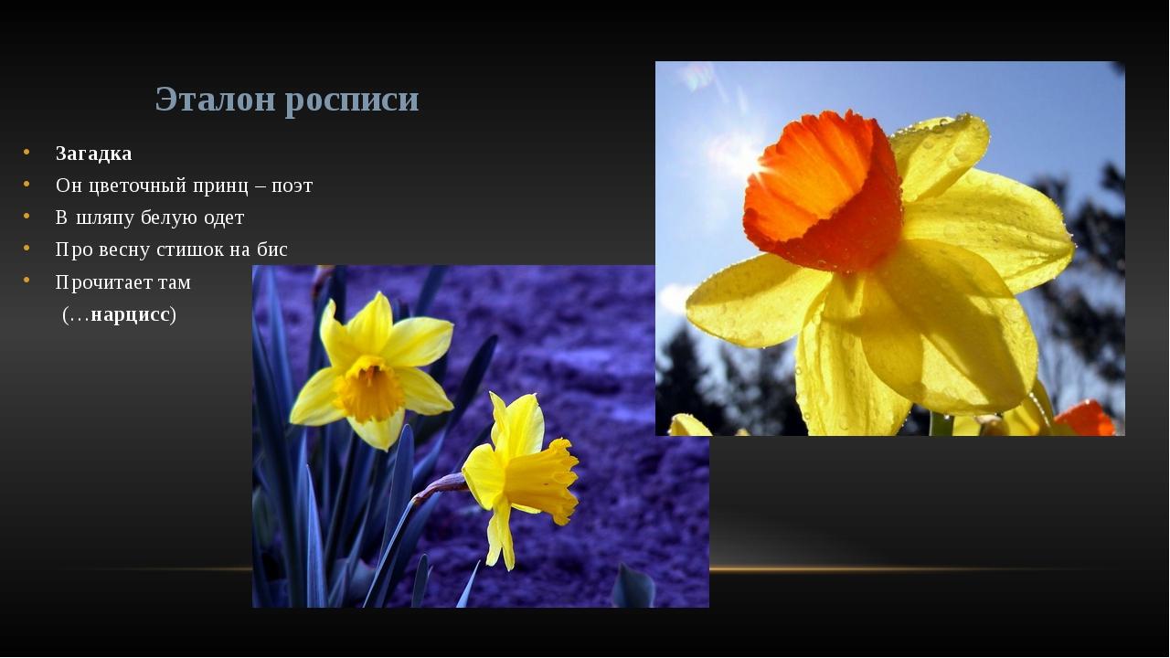 Загадка    Он цветочный принц – поэт В шляпу белую одет Про весну стишок н...