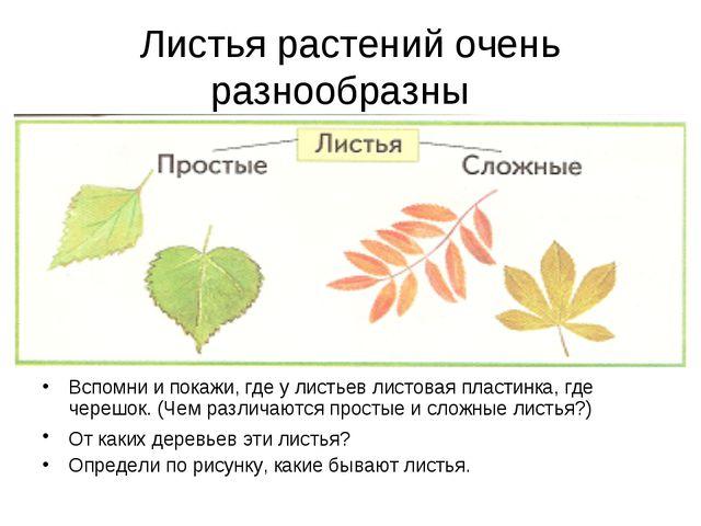 Листья растений очень разнообразны Вспомни и покажи, где у листьев листовая п...