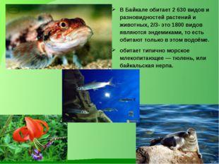 В Байкале обитает 2 630 видов и разновидностей растений и животных, 2/3- это