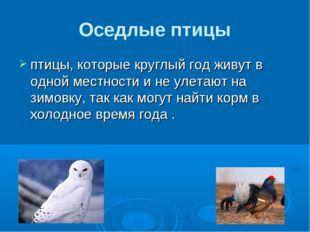 Оседлые птицы птицы, которые круглый год живут в одной местности и не улетают