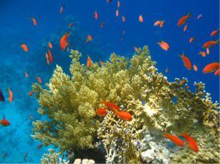 Атолл – коралловый остров в океане