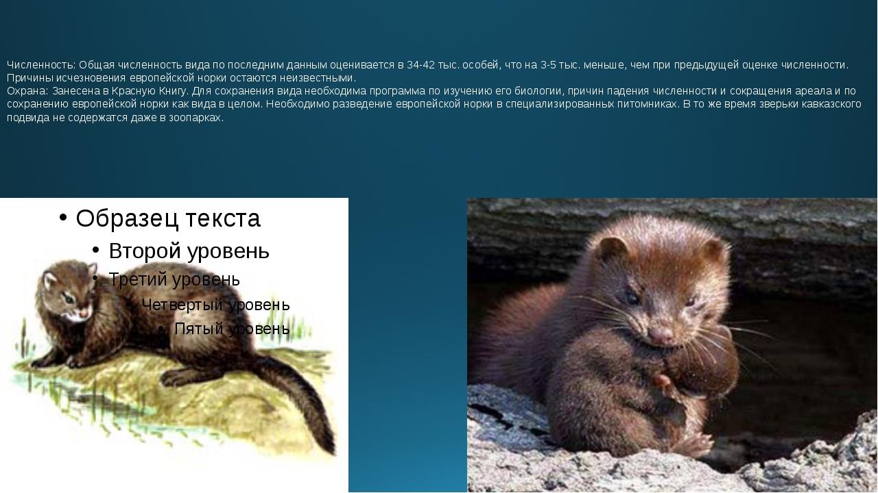 Численность: Общая численность вида по последним данным оценивается в 34-42 т...