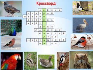 Кроссворд о р н и л в а 1 с р о к а в к 3п 2с е ц и р ь г е н 4с т с ё л 5к о