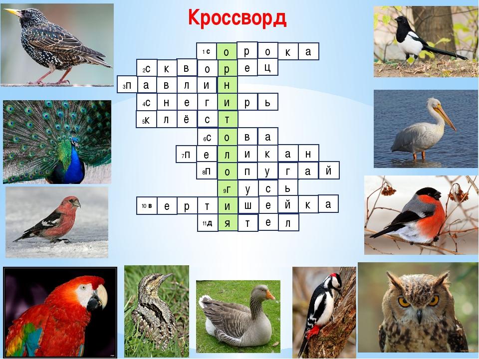 Кроссворд о р н и л в а 1 с р о к а в к 3п 2с е ц и р ь г е н 4с т с ё л 5к о...