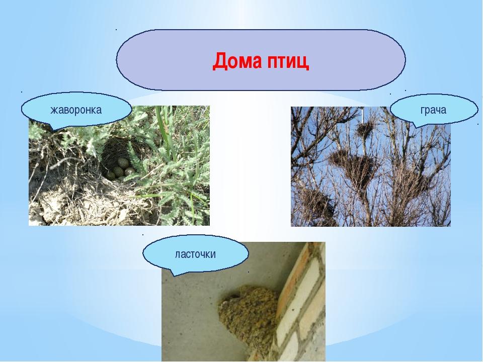Дома птиц ласточки жаворонка грача