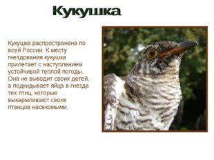 Кукушка распространена по всей России. К месту гнездования кукушка прилетает