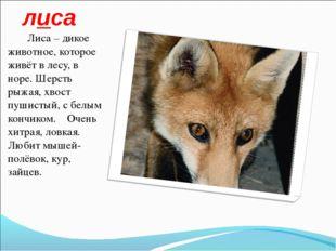 лиса Лиса – дикое животное, которое живёт в лесу, в норе. Шерсть рыжая, хвост