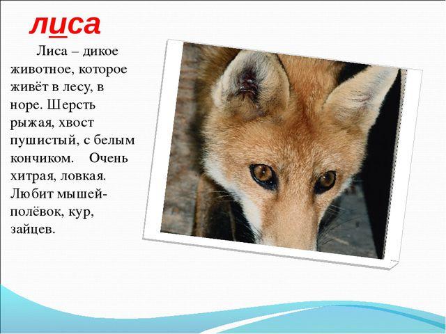 лиса Лиса – дикое животное, которое живёт в лесу, в норе. Шерсть рыжая, хвост...
