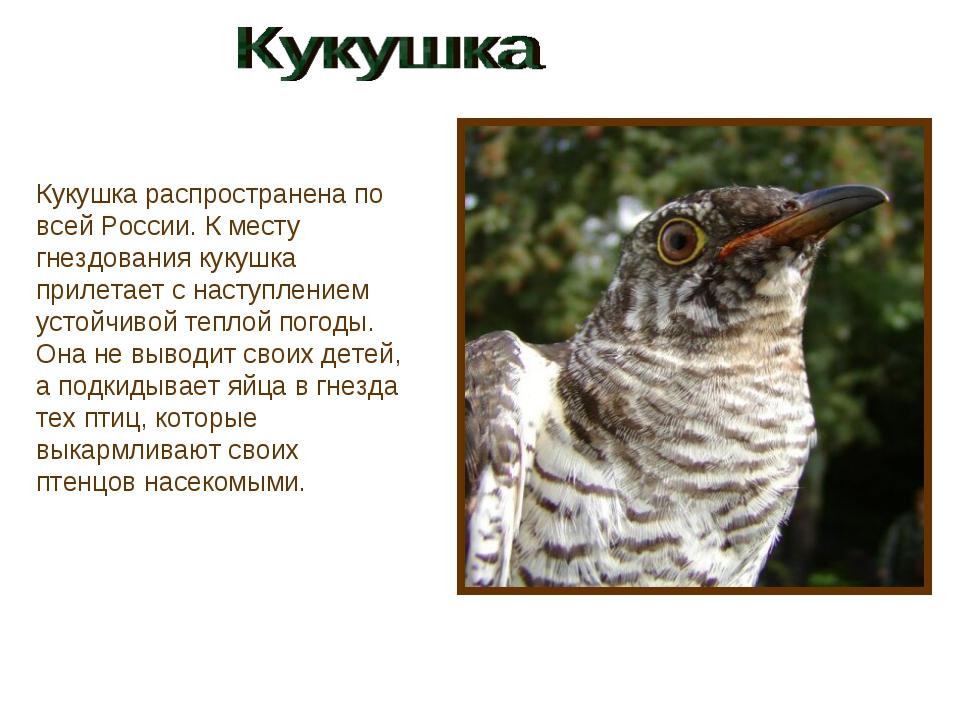 Кукушка распространена по всей России. К месту гнездования кукушка прилетает...