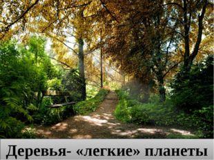 Деревья- «легкие» планеты