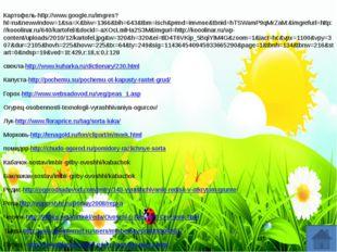 Картофель-http://www.google.ru/imgres?hl=ru&newwindow=1&sa=X&biw=1366&bih=64