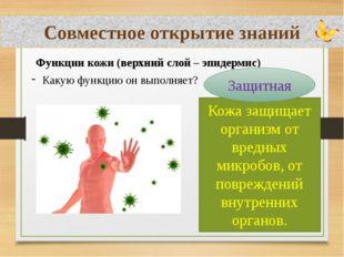 Совместное открытие знаний Функции кожи (верхний слой – эпидермис) Какую фун