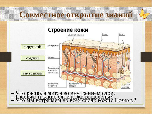Совместное открытие знаний – Что располагается во внутреннем слое? – Что мы...