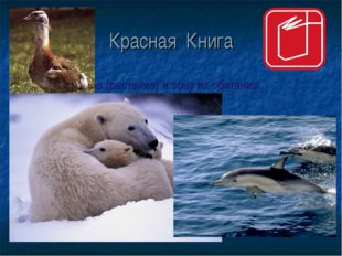 Красная Книга Назови животное (растение) и зону их обитания.