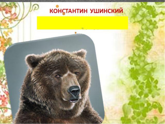 «Учёный медведь»