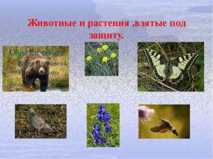 Животные и растения ,взятые под защиту.