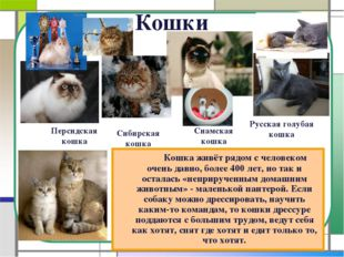 Кошки Кошка живёт рядом с человеком очень давно, более 400 лет, но так и ос