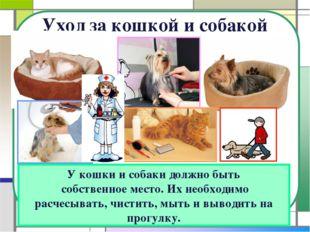 Уход за кошкой и собакой У кошки и собаки должно быть собственное место. Их н