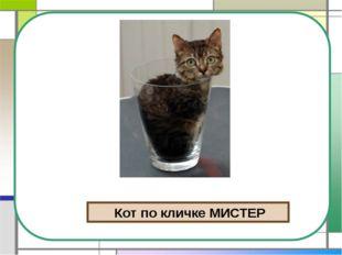 Кот по кличке МИСТЕР