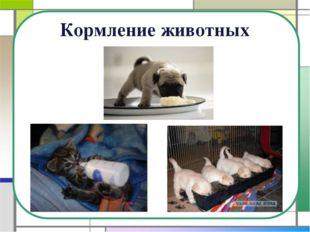 Кормление животных