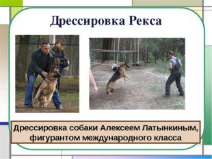 Дрессировка Рекса Дрессировка собаки Алексеем Латынкиным, фигурантом междунар