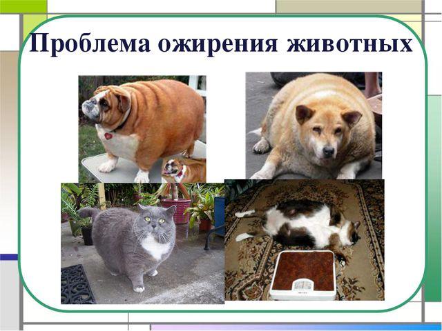 Проблема ожирения животных