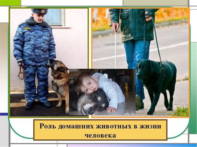 Роль домашних животных в жизни человека