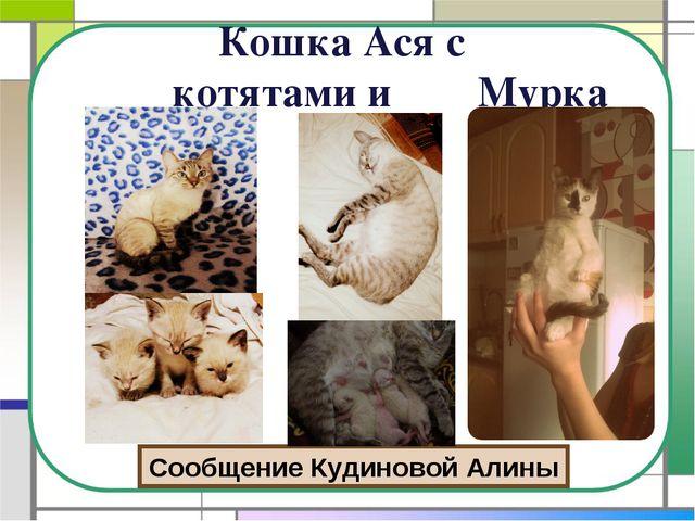 Кошка Ася с котятами и Мурка Сообщение Кудиновой Алины