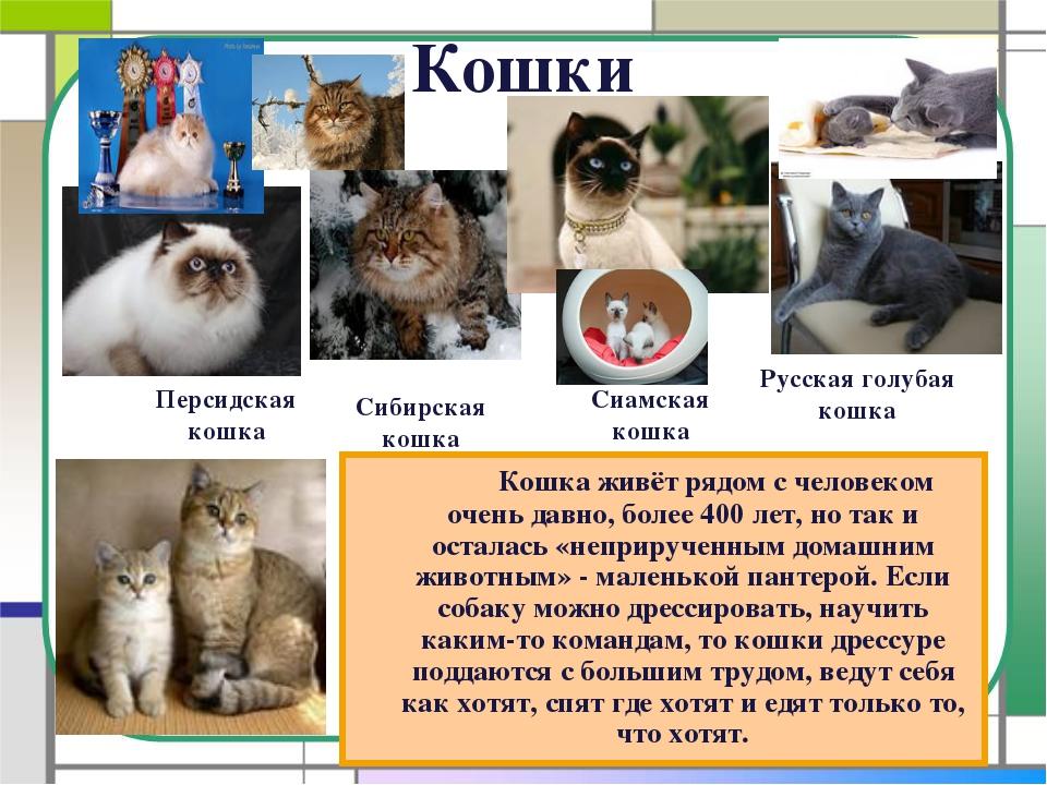 Кошки Кошка живёт рядом с человеком очень давно, более 400 лет, но так и ос...