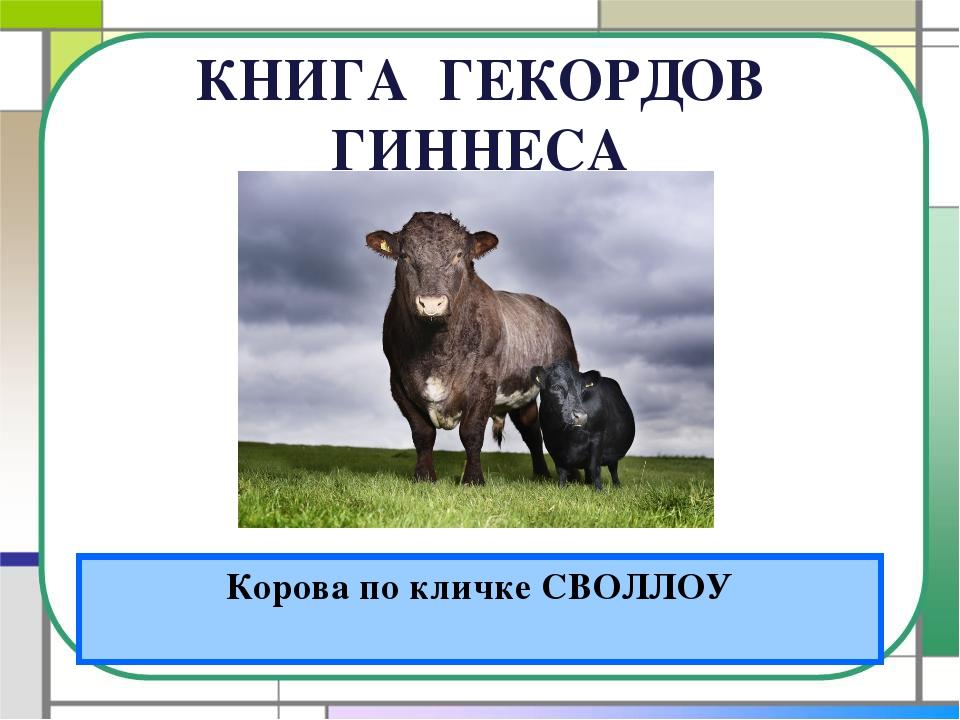 КНИГА ГЕКОРДОВ ГИННЕСА Корова по кличке СВОЛЛОУ