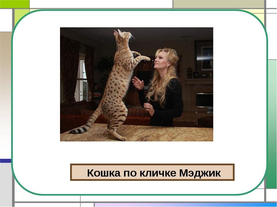 Кошка по кличке Мэджик