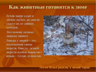 Как животные готовятся к зиме Летом звери ходят в лёгких шубах, но они не спа