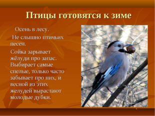 Птицы готовятся к зиме Осень в лесу. Не слышно птичьих песен. Сойка зарывает