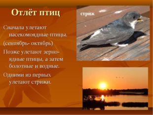 Отлёт птиц Сначала улетают насекомоядные птицы. (сентябрь- октябрь) Позже уле