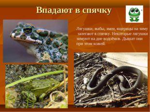 Впадают в спячку Лягушки, жабы, змеи, ящерицы на зиму залегают в спячку. Неко