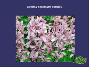 Ясенец-растение степей