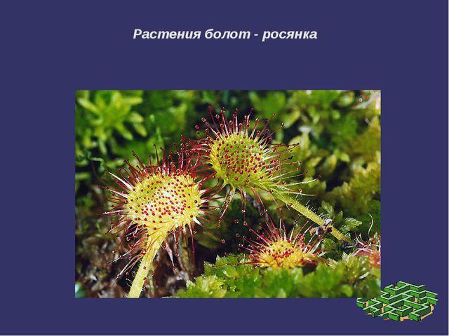 Растения болот - росянка