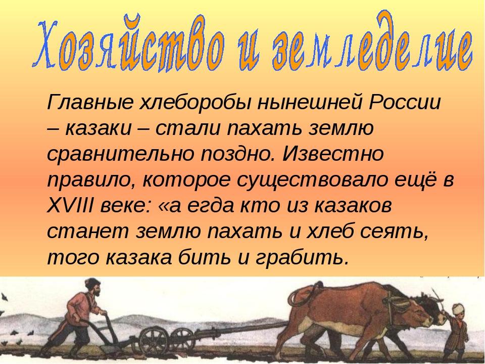 Главные хлеборобы нынешней России – казаки – стали пахать землю сравнительно...