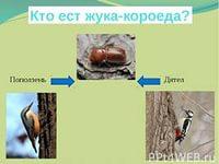 hello_html_1b5a00dd.jpg