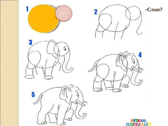 -Слон?